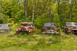 "Photo by Silke Mildenberger: ""Forgotten cars are ageing and slowly disappearing in a fores ..."