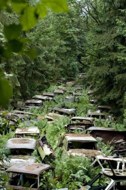 Where old cars go to die.