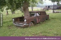Old Chevy with tree growing out of it