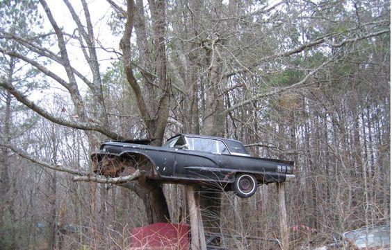 1958 Thunderbird in a tree.